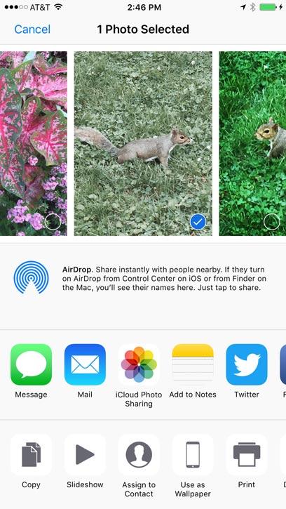iPhone Basics: Camera and Photos