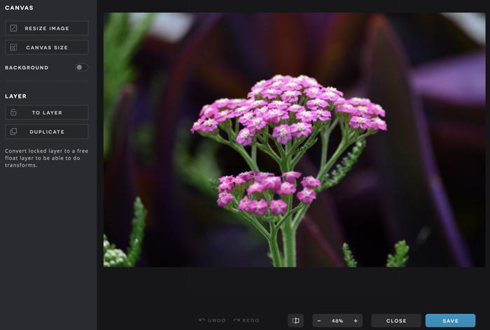 A screenshot of the Pixlr X Arrange menu and an image.