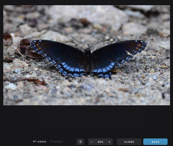 A screenshot of the Pixlr X interface showing a cropped image.