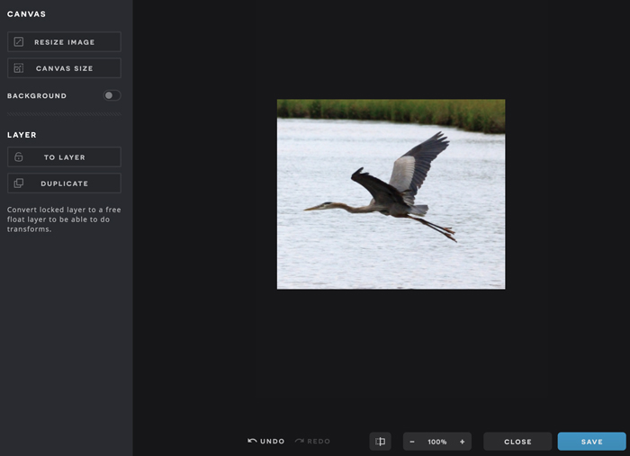 A screenshot of the Pixlr X interface, featuring a cropped image.