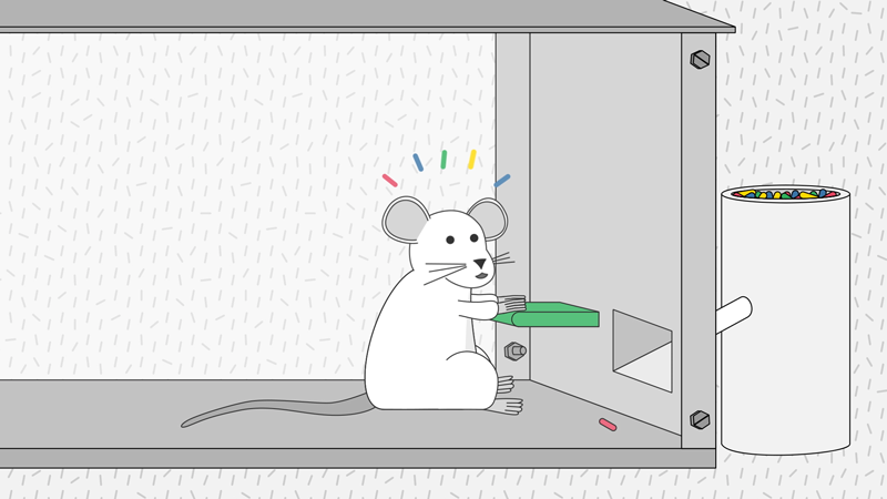 A mouse excited to find food after pushing a lever.