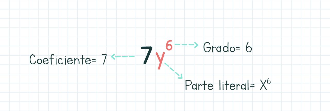 Partes de los monomios en álgebra