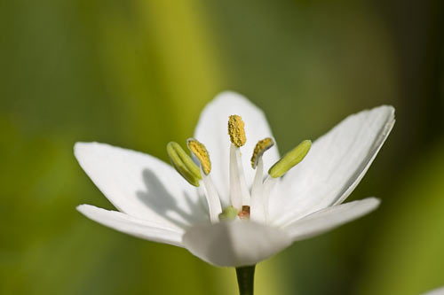 A close-up photo of a flower