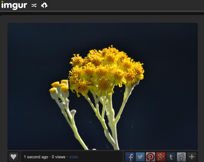 screenshot of Imgur