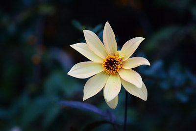 image of flower at 400px wide