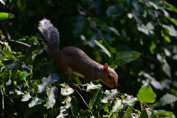 image of squirrel