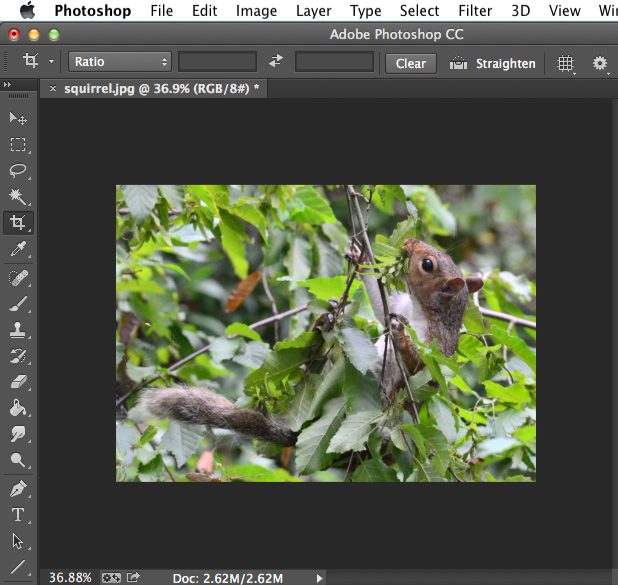 Photoshop CC 2018 Essential Training The Basics