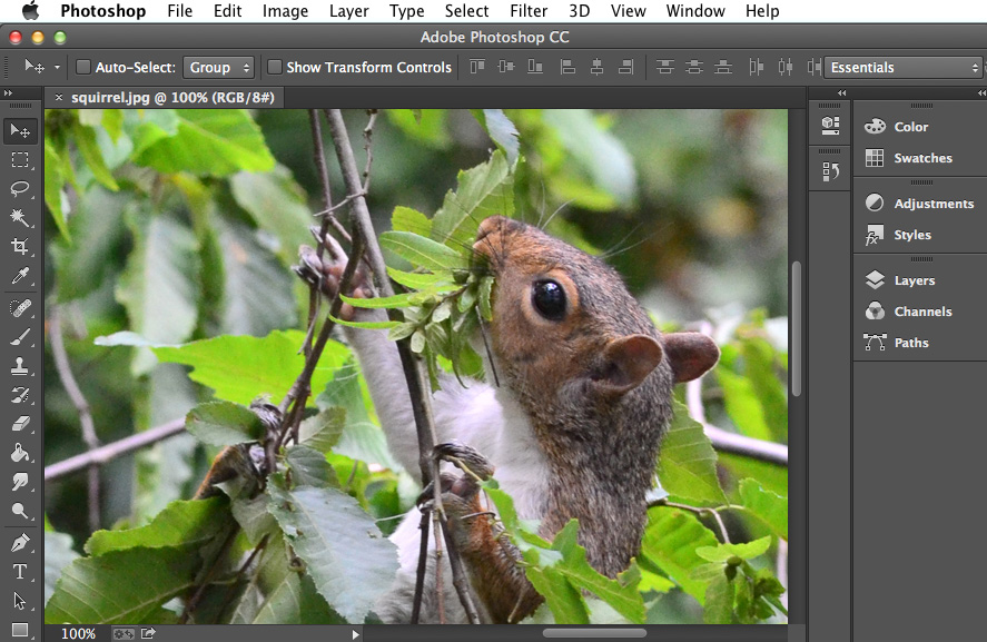 Photoshop basics getting to know the photoshop interface full page screenshot of adobe photoshop cc ccuart Image collections